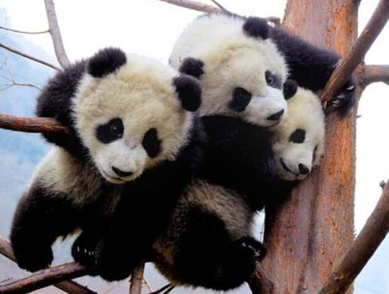 Baby Panda Party Pictures