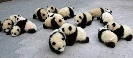 babypandaparty
