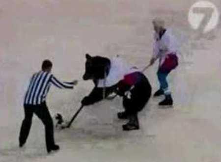 bears-playing-hockey