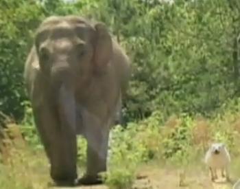 elephant-dog-friendship