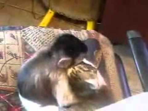 Video thumbnail for youtube video A Cat and Monkey Make Out