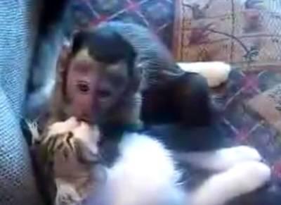 cat-monkey-makeout