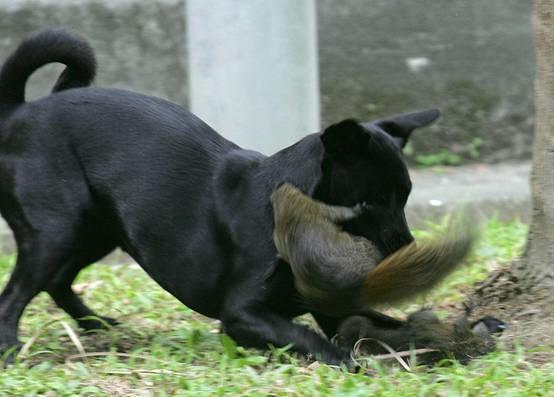 dog-squirrel-baby-rescue