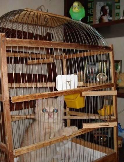 parakeet-bird-love-story