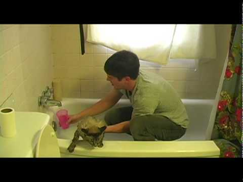 Video thumbnail for youtube video How To Wash A Cat
