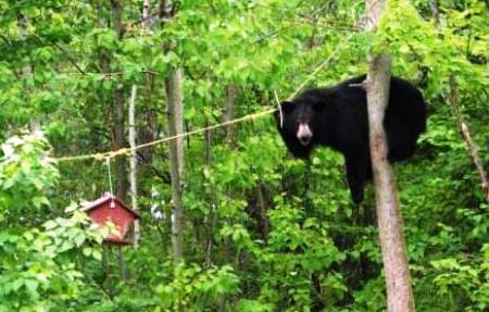 bear-with-bird-feeder