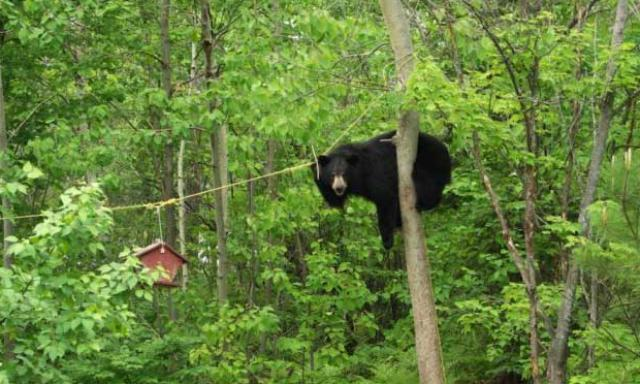 bear-with-bird-feeder1