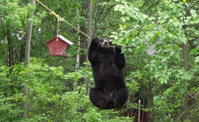 bear-with-bird-feeder2