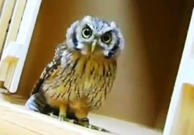 owl-invisible-prey