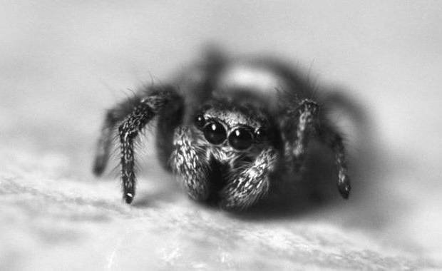 Cute Spiders Picture