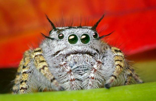 Cute Spiders Exist