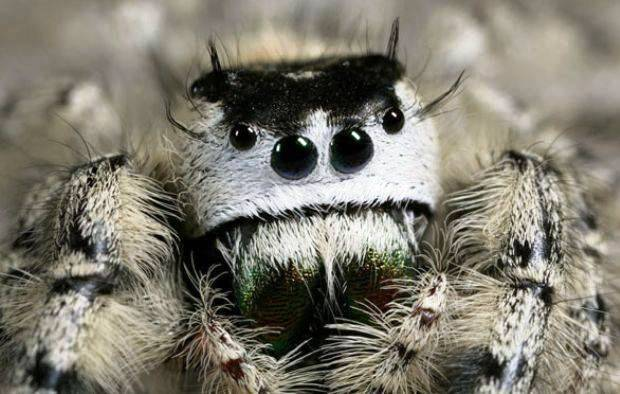 cute-spiders-exist-3