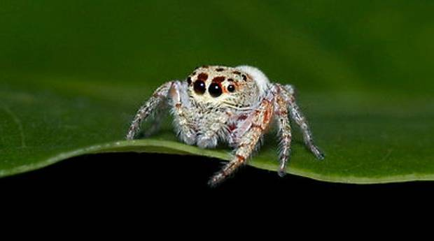 Cute Spiders Photogoraph