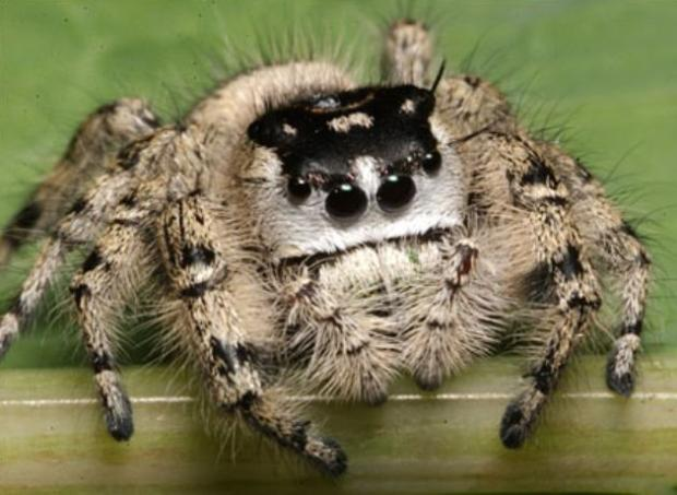 Adorable Spiders