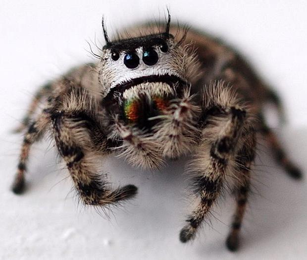 cute-spiders-exist-6
