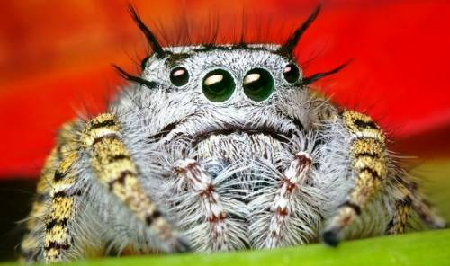 cute-spiders