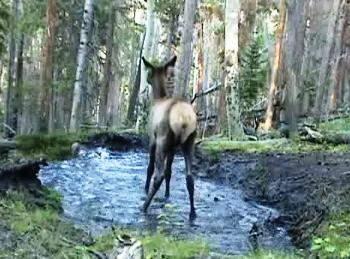 deer-bath