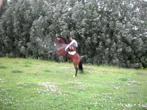Video thumbnail for youtube video Horse Jumping Rope