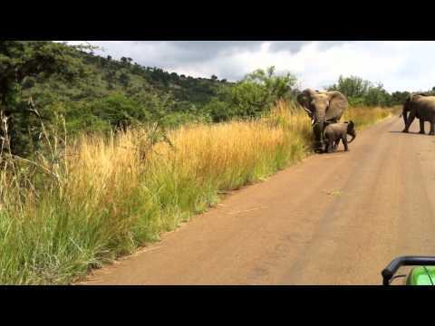 Video thumbnail for youtube video Baby Elephant Charge