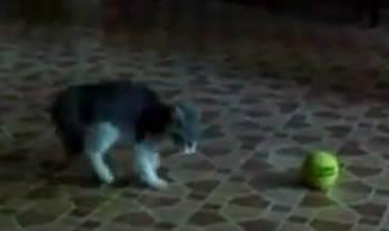 kitten-versus-tennis-ball