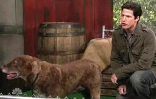 mark-wahlberg-talks-animals