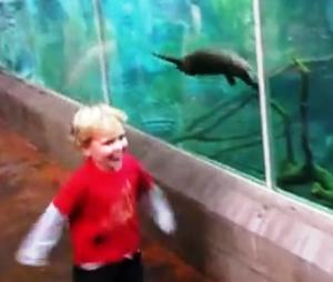 playing-with-otter