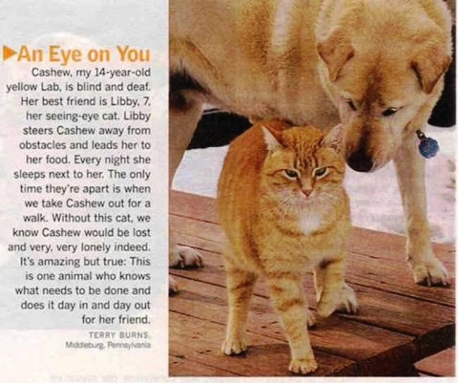 An Eye On You Cat Dog Friendship