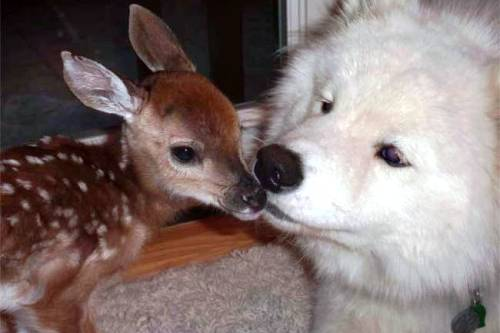 dog-fawn-friends