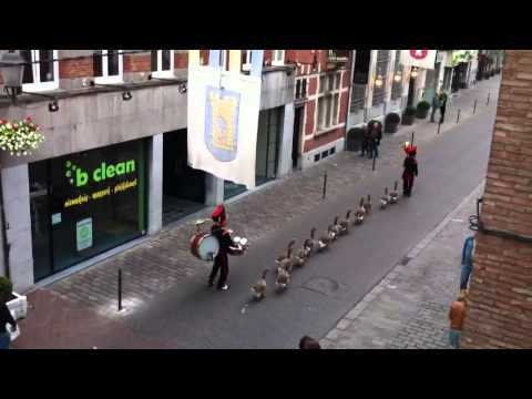 Video thumbnail for youtube video Geese Marching Band Precession