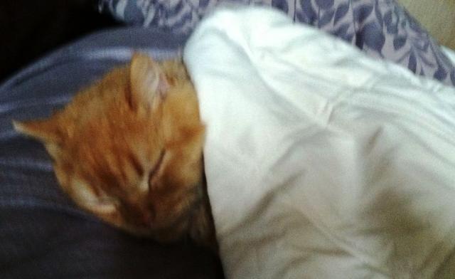 Sleeping Cute Cat