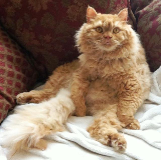 Sitting Cat Wut