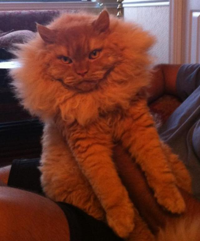 Puffy Fluffy Adorable Cat Pic
