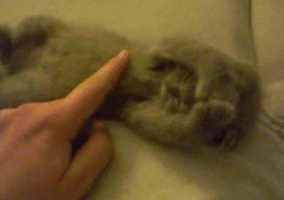 tickling-kitten