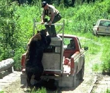 bear-release-fail