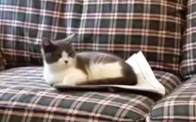 stupid-cat