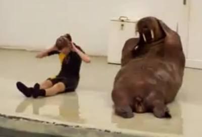 walrus-workout-video