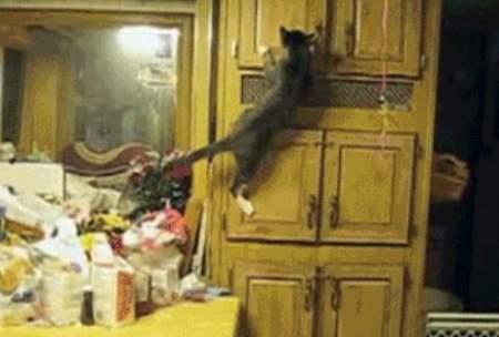 parkour-kitchen-cat