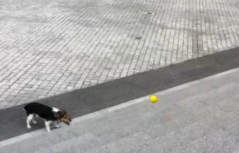 catch-dog