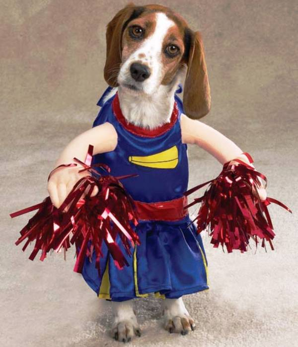 Dog Dressed As A Cheerleader