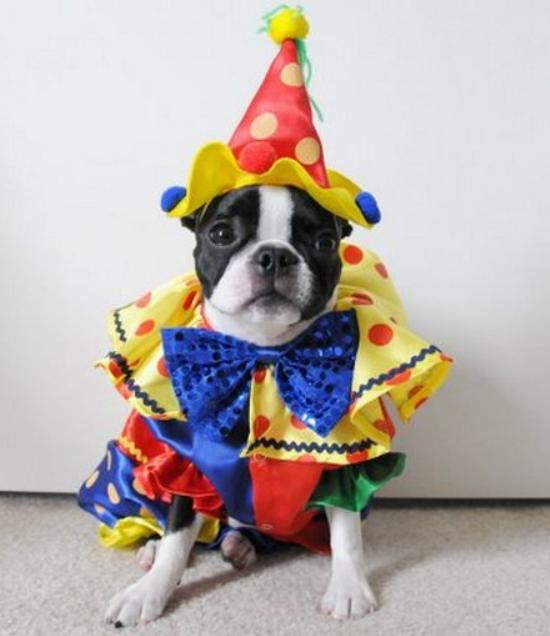 dog-clown-costume