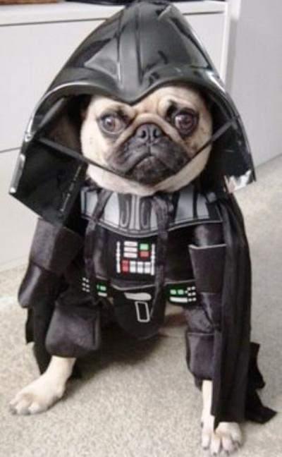 dog-costumes