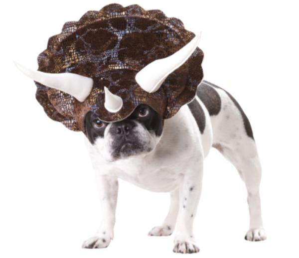 Dog in Triceratops Costume