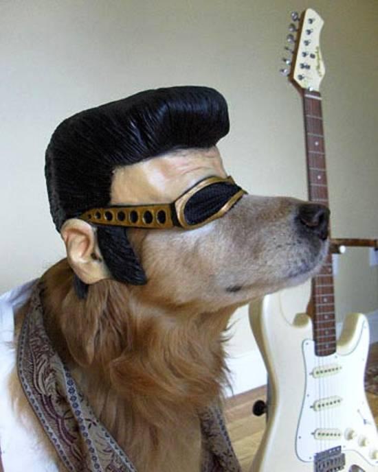 dog-elvis-costume