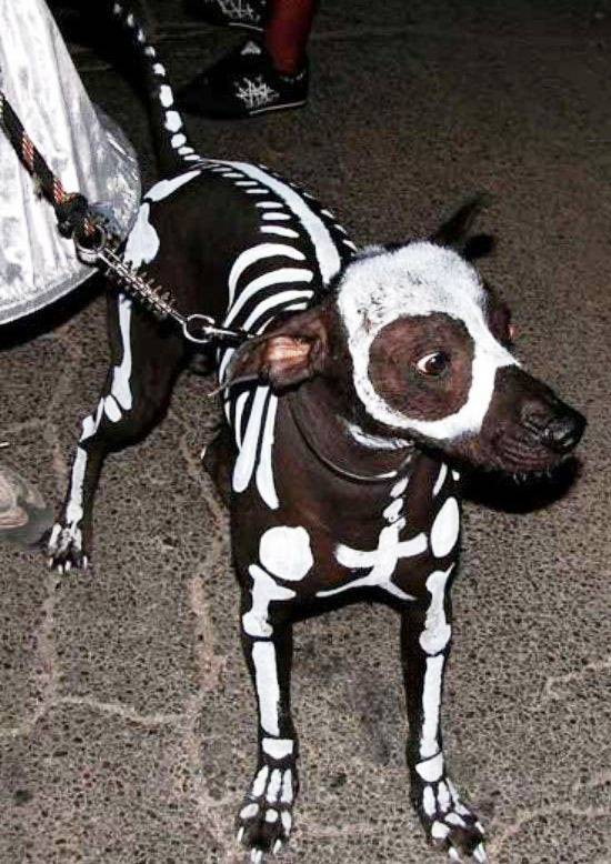 Dog Dressed As A Skeleton For Halloween