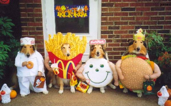Dog In Fast Food Costumes