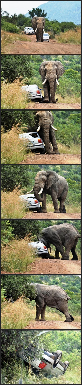 elephant-road-rage