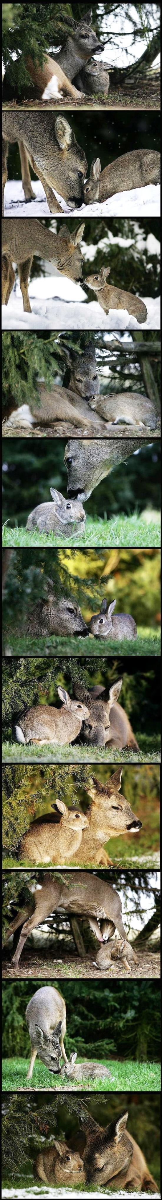 Bambi and Thumper Friends Picture
