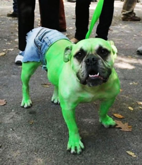 incredible-hulk-dog-costume