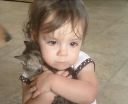 kitten-love