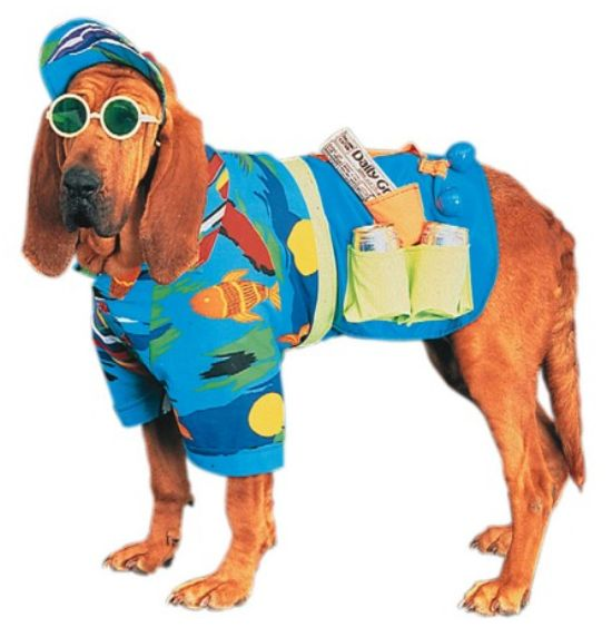 Surfer Dog Funny Picture